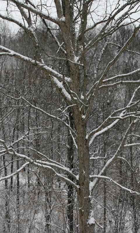 Kentucky Snow