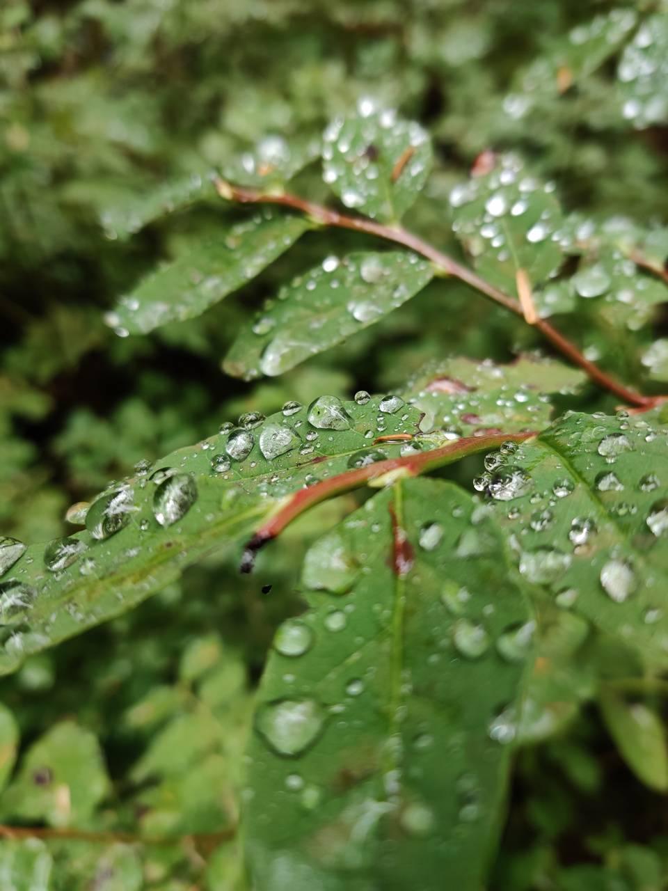 Post rainsrorm