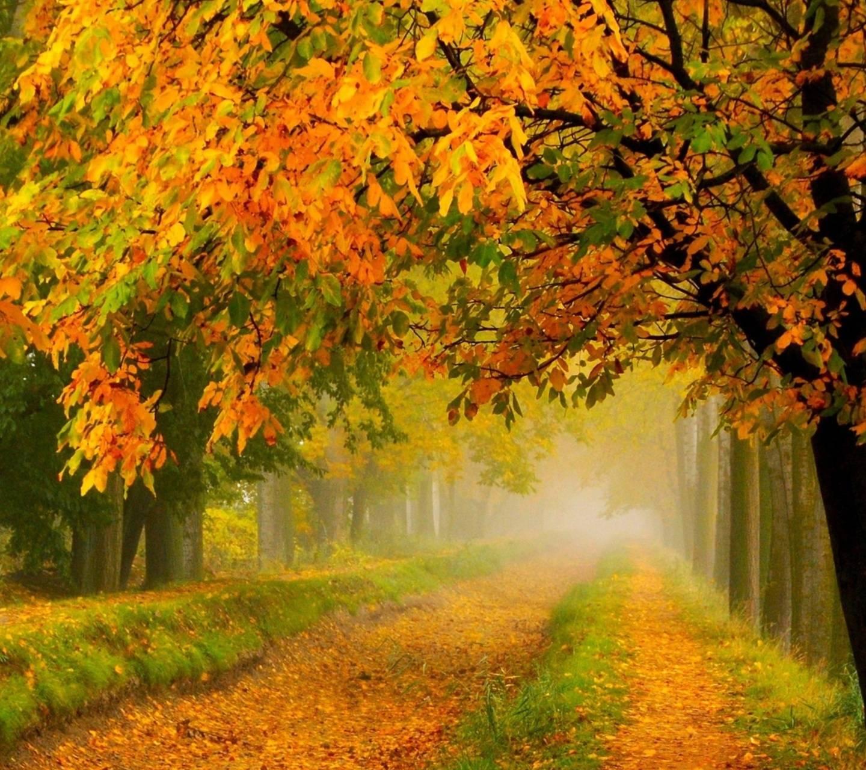 Crimson Autumn Park