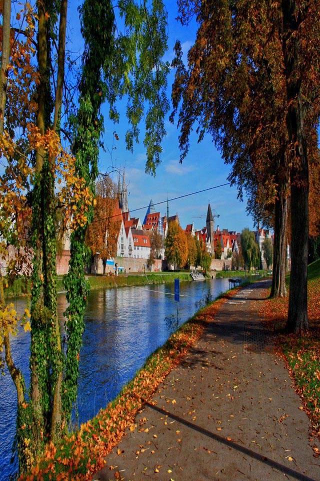 Road trees autumn