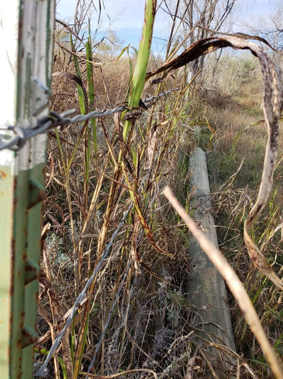 Bobwire Fence