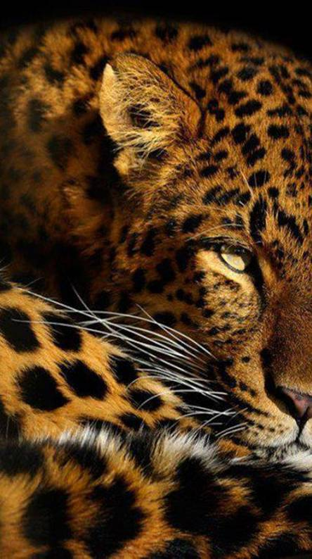 Wild Animals Wallpapers Free By Zedge