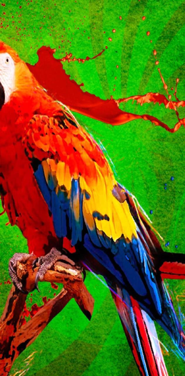Big Parrot