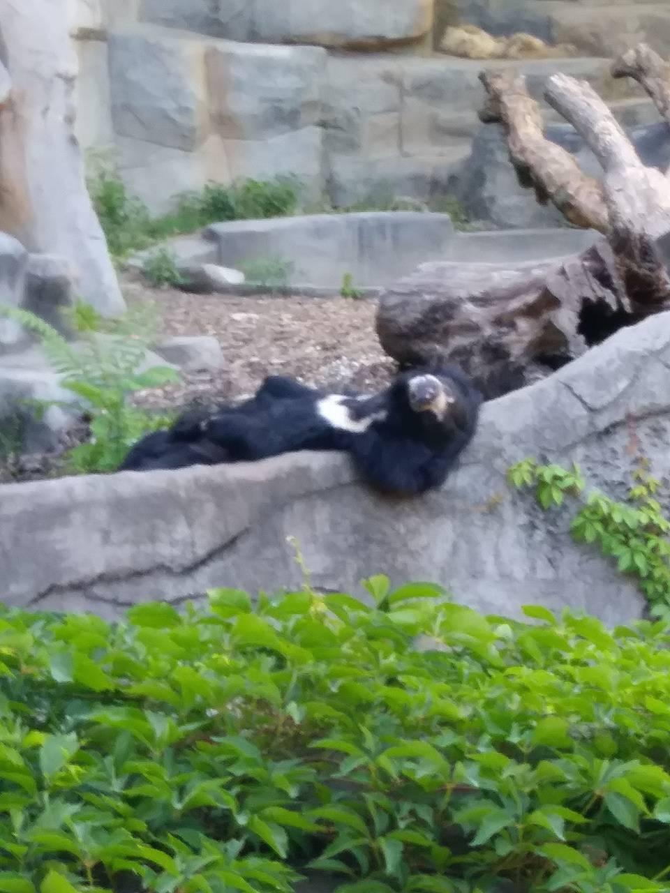 Funny Sloth Bear