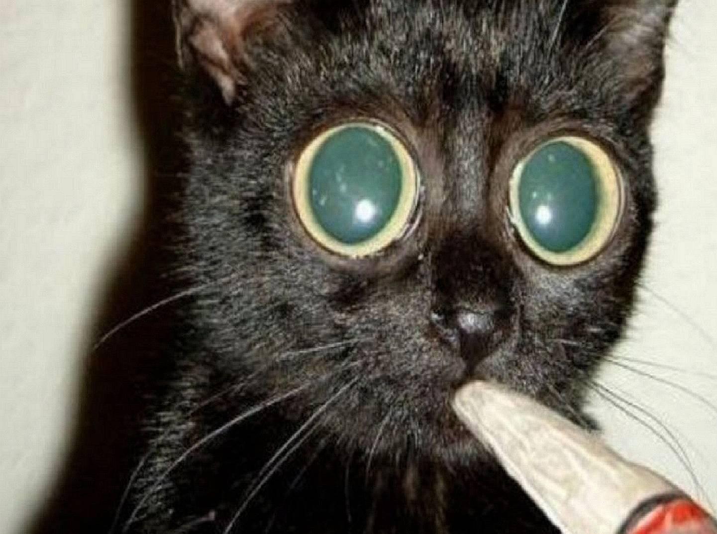cat smoker---------