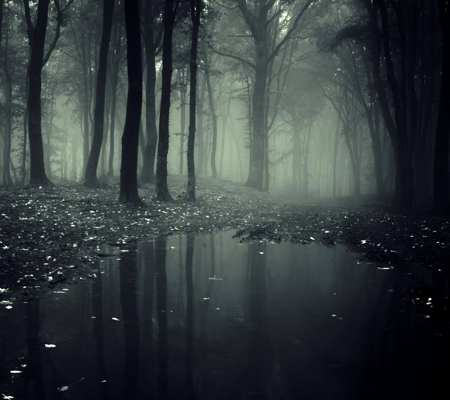 Creepy Forest Wallpaper By Pavelericsson