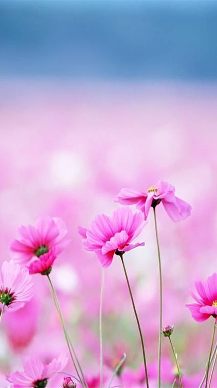 Cool Pink Flowers