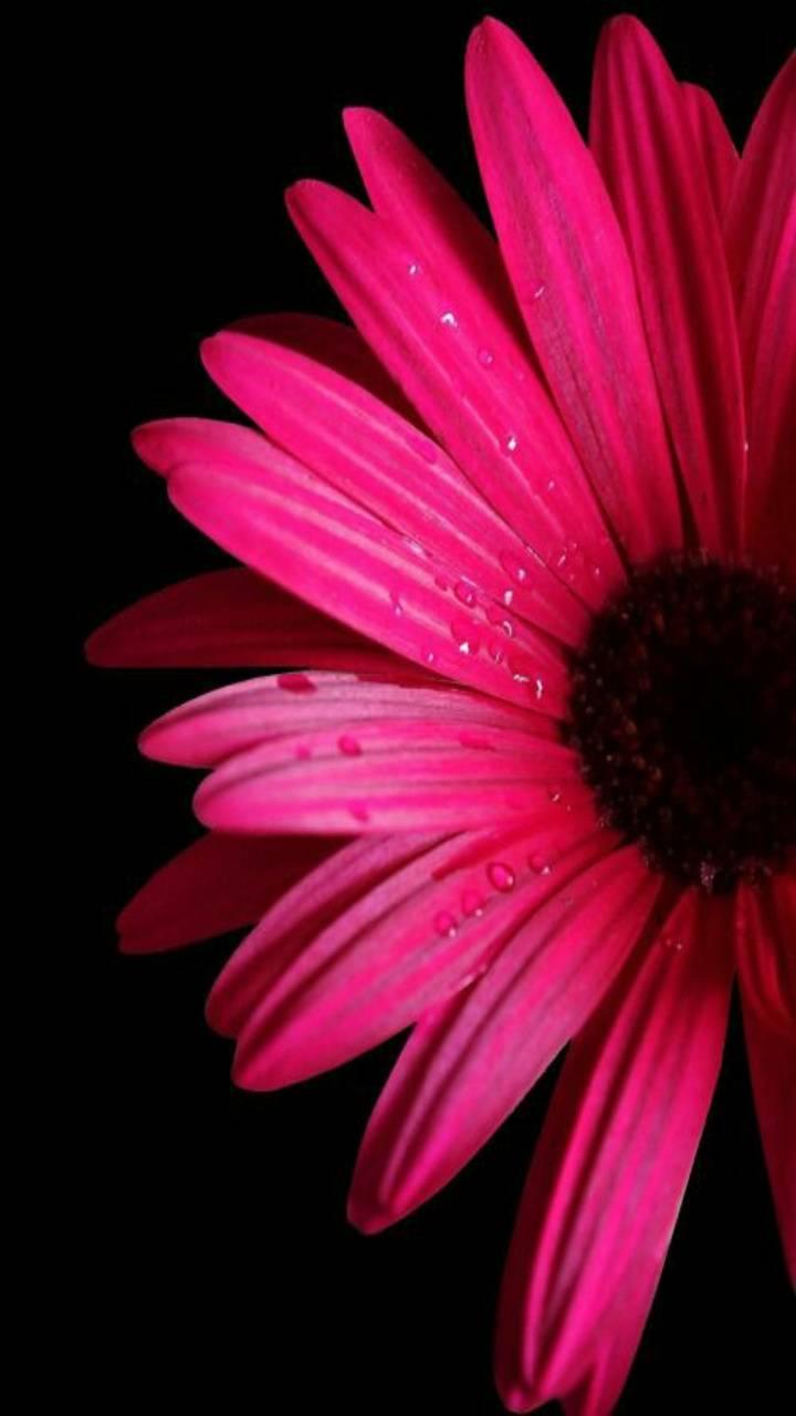 flower wallpaper by kaeira - cd - Free on ZEDGE™