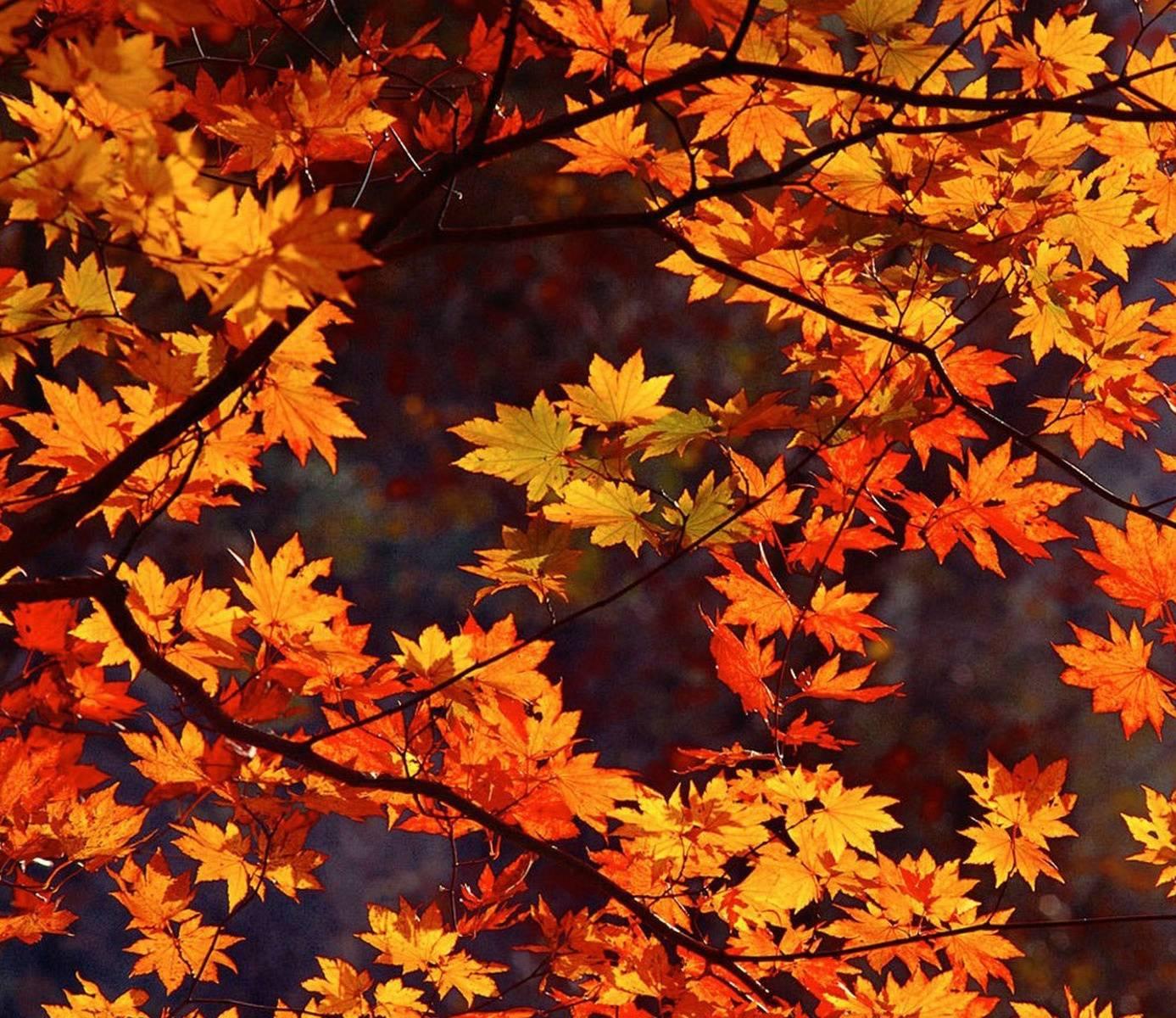 Красивые картинки с осенью и надписями