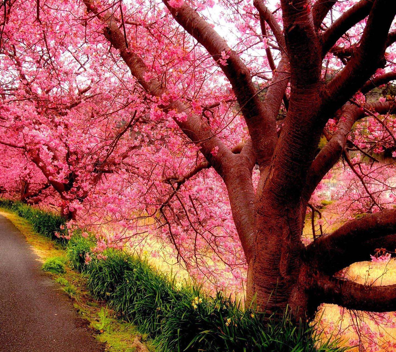 Blossomed Tree