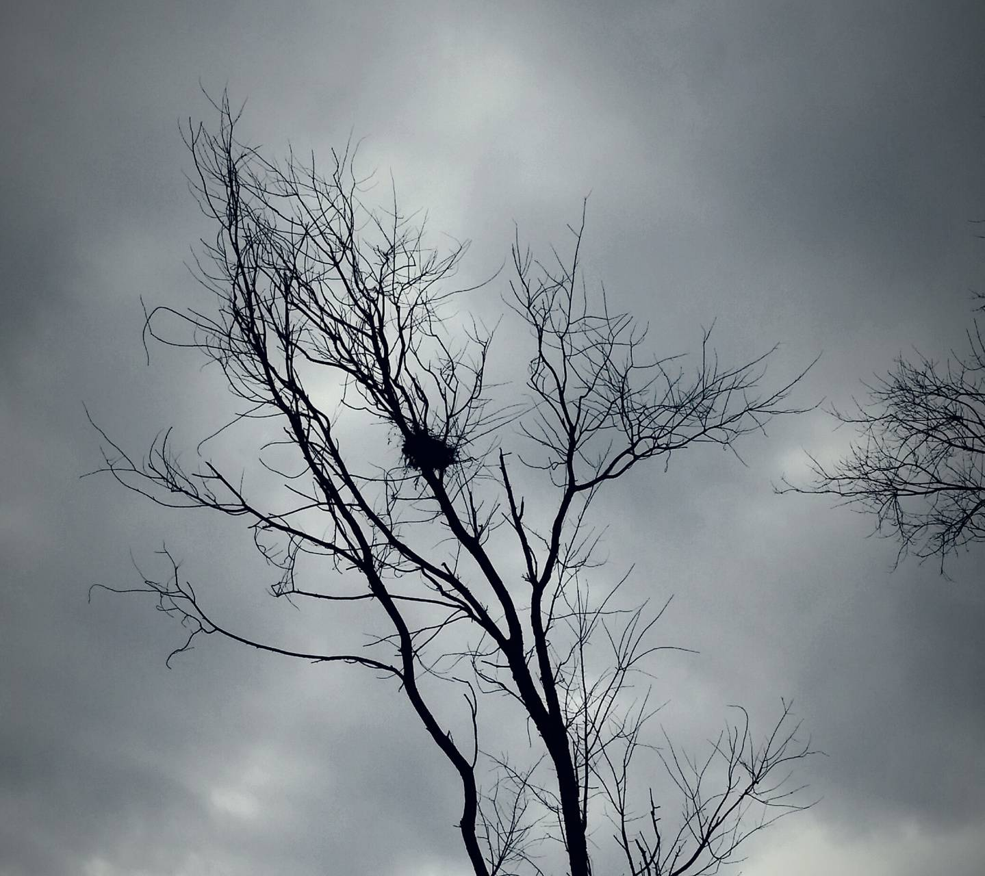 Tree and Nest