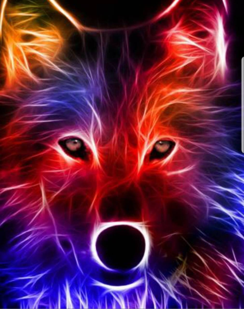 Coloured fox
