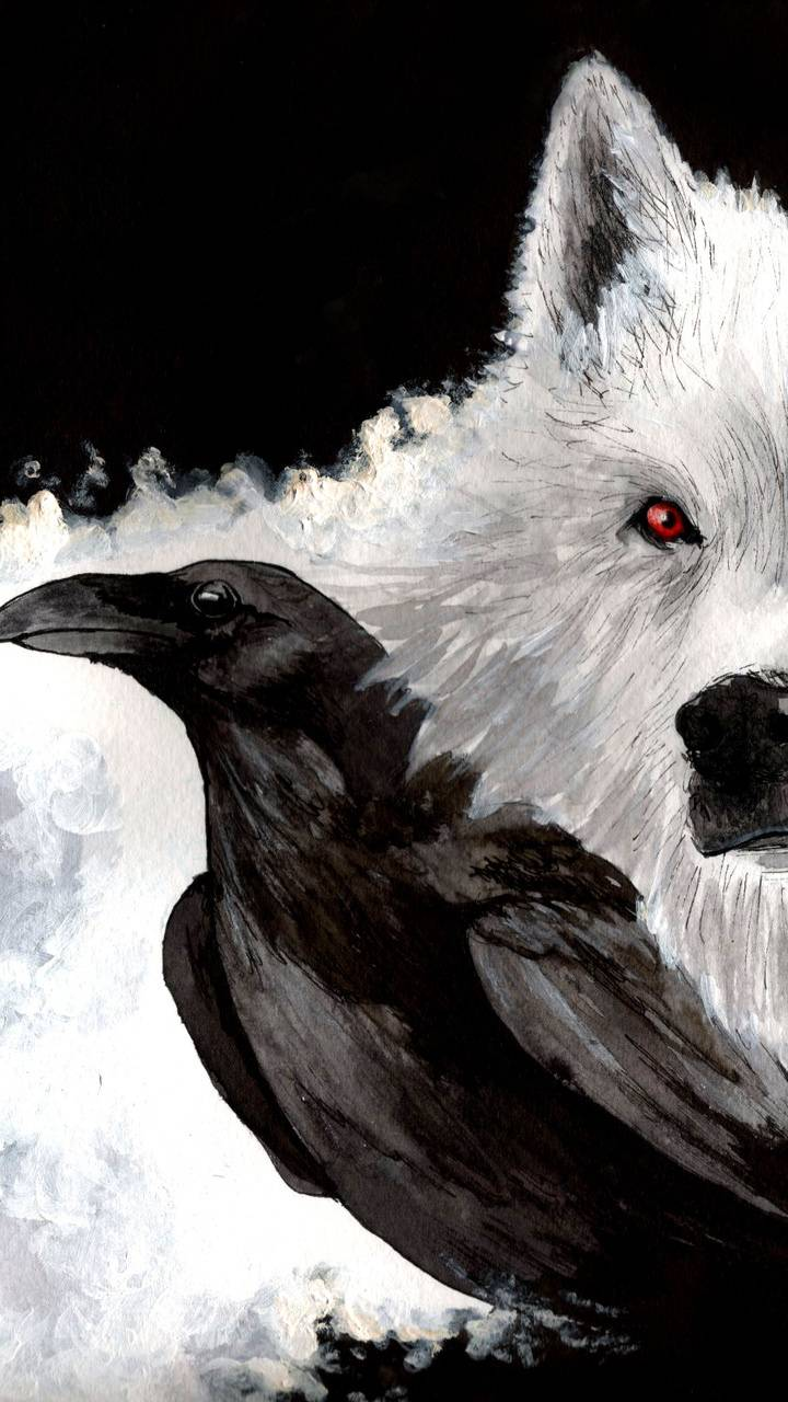 Crow and Albino Wolf