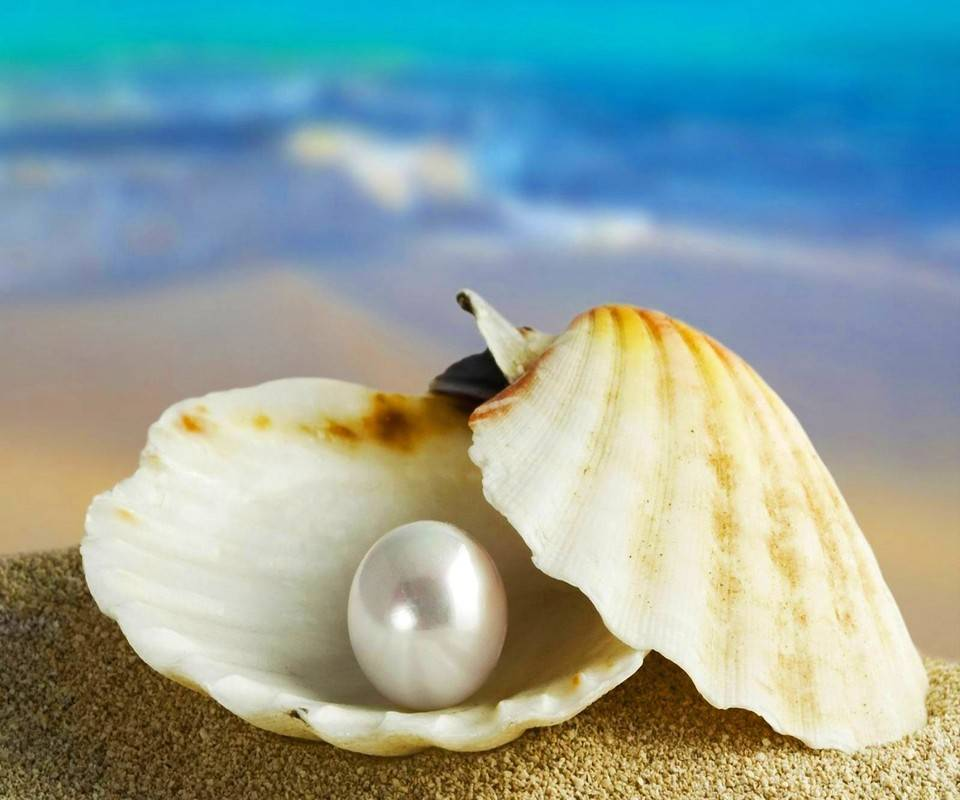 Pearly Shell