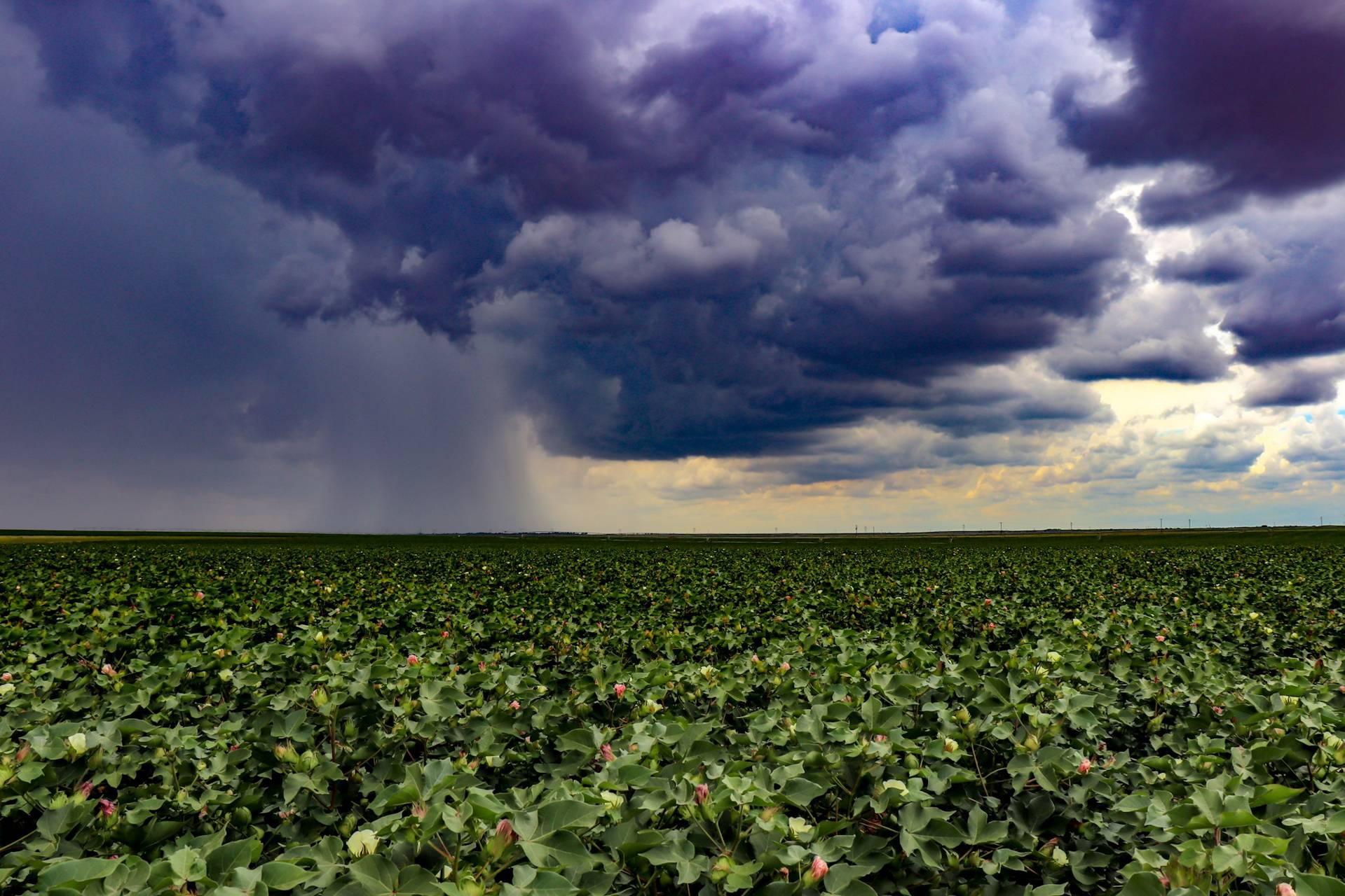 Rain in a field