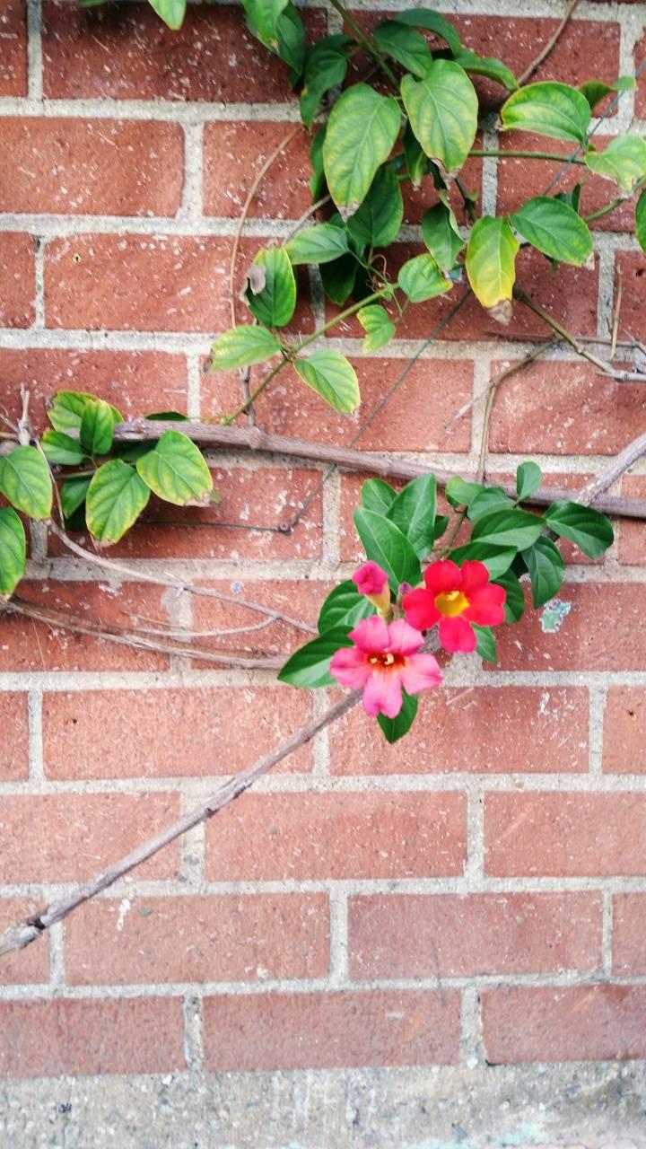 Flower brick wall