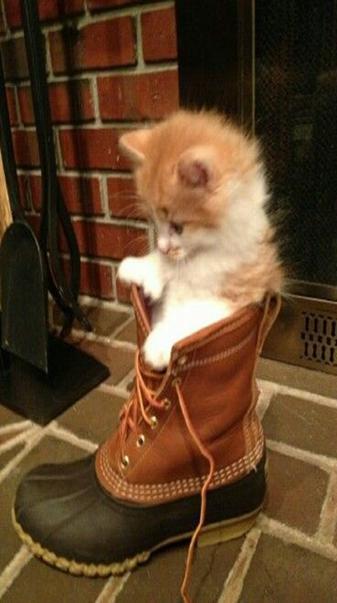 Cat in the shoe