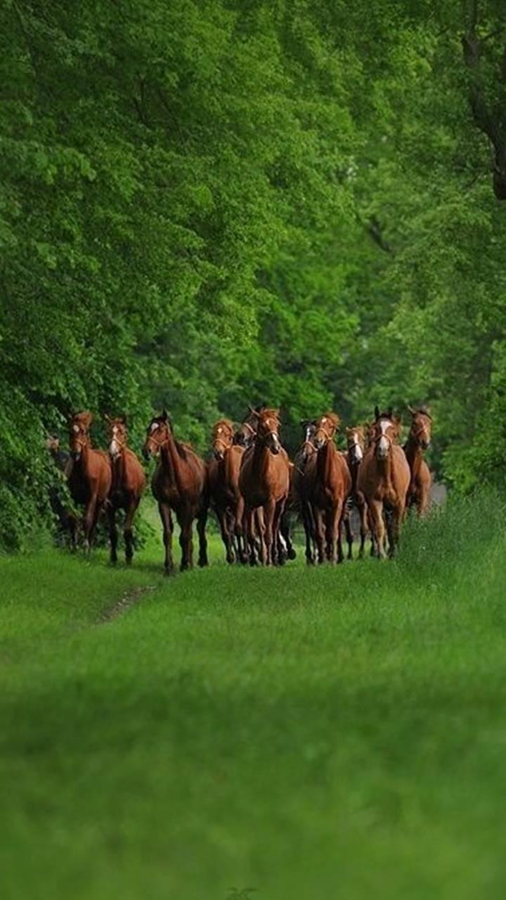 Nature Horses