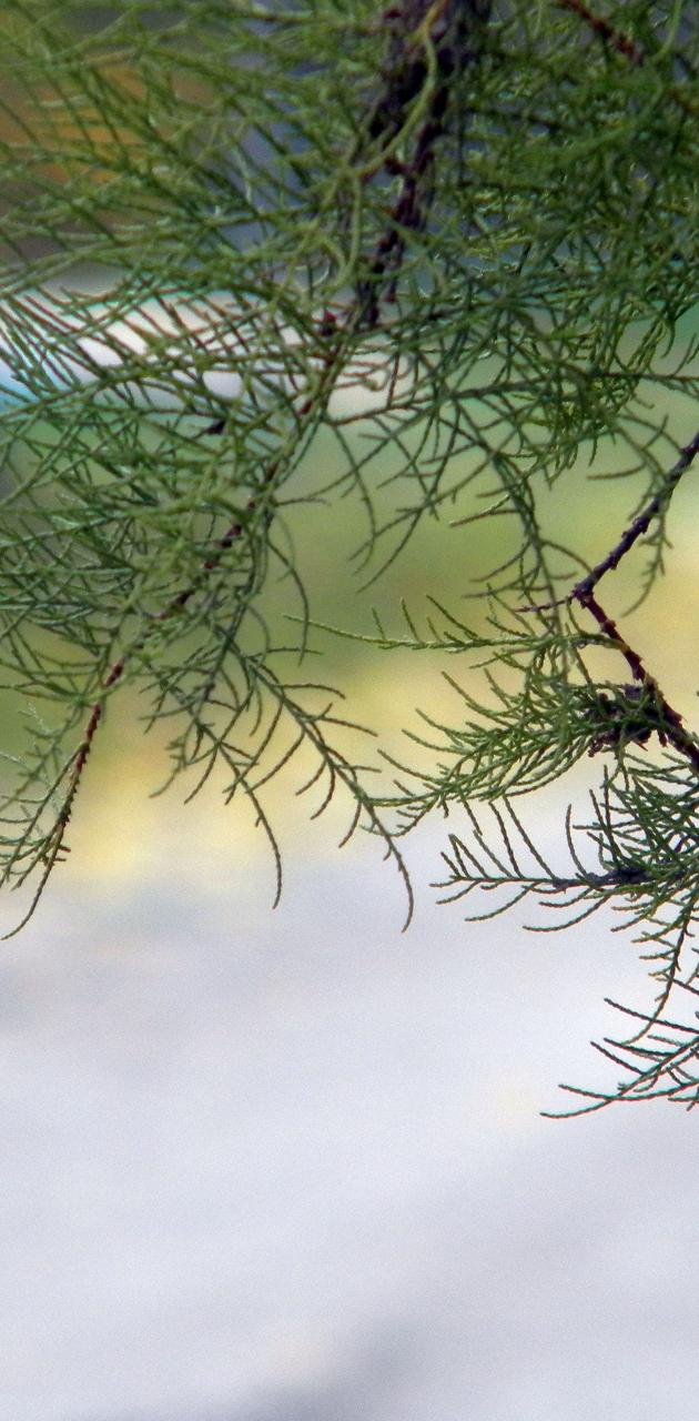 view at trees