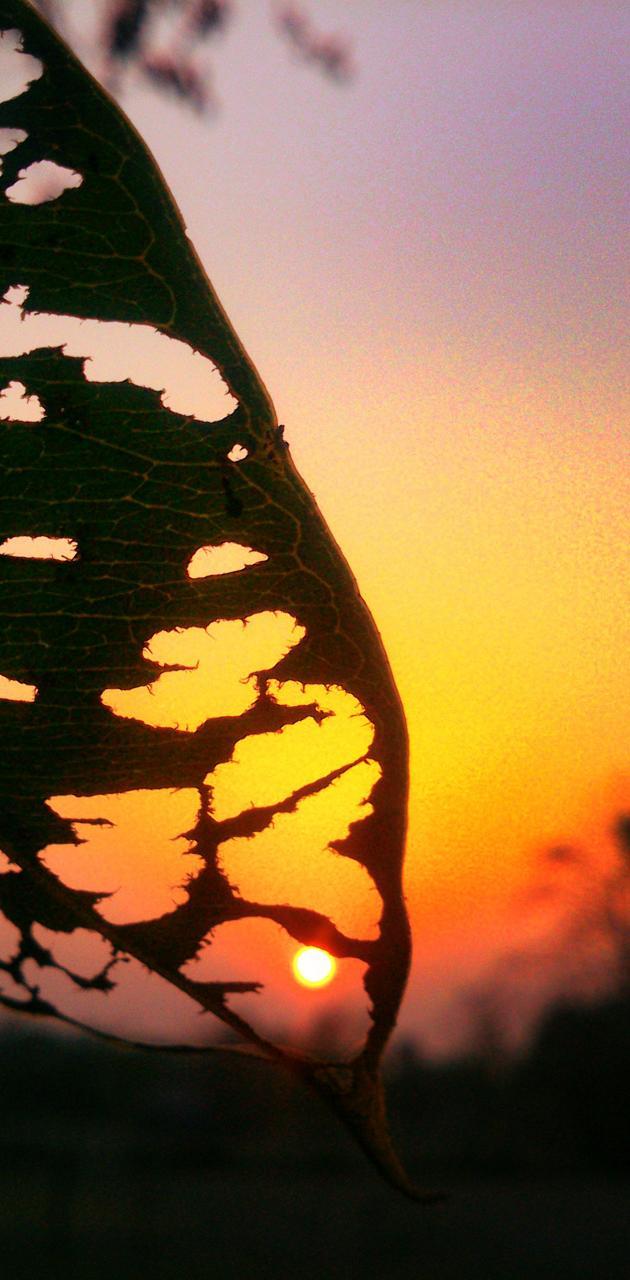 Broken leaf sunsite