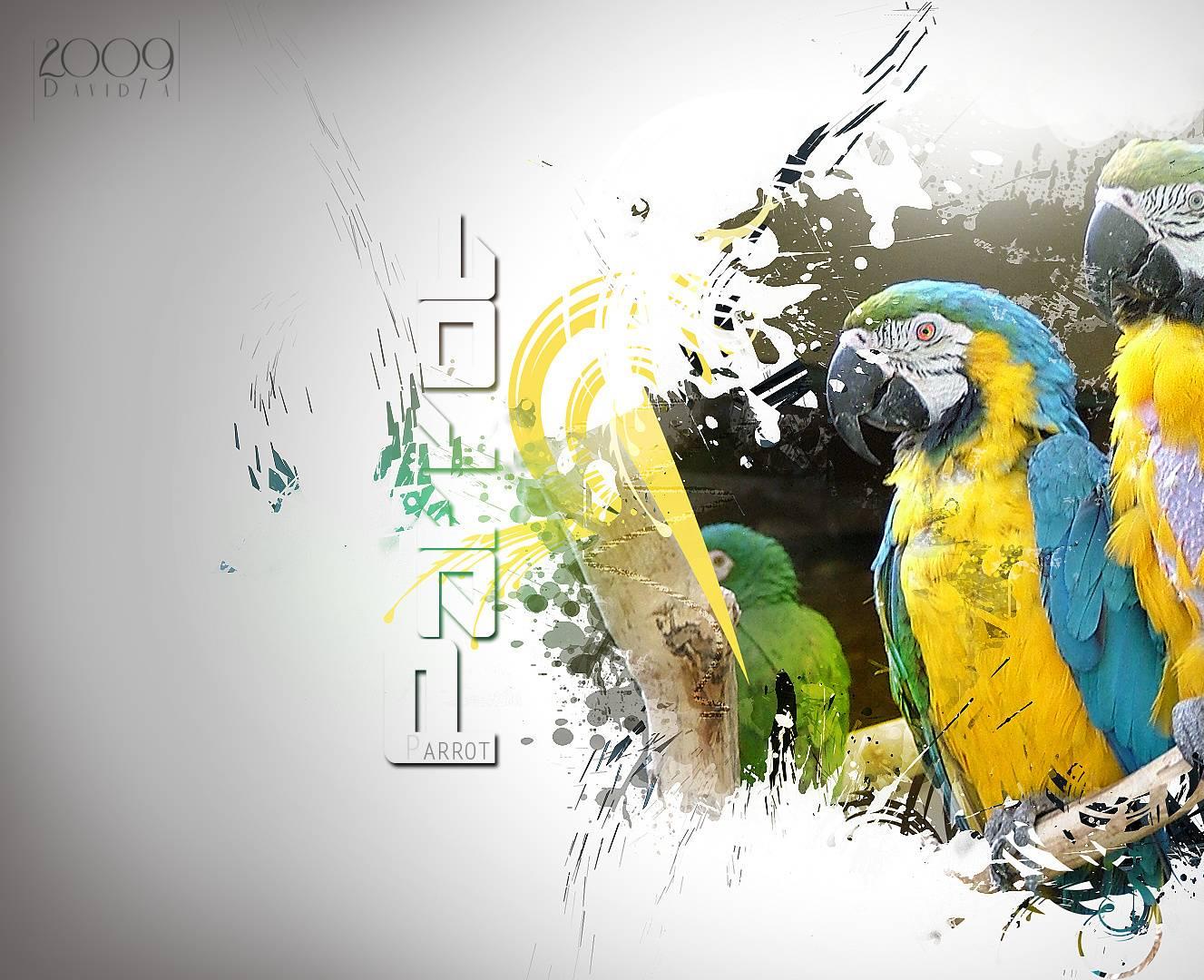 Mihit Parrot