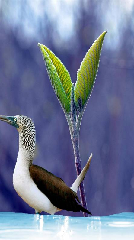 Bird Sounds and Ringtones