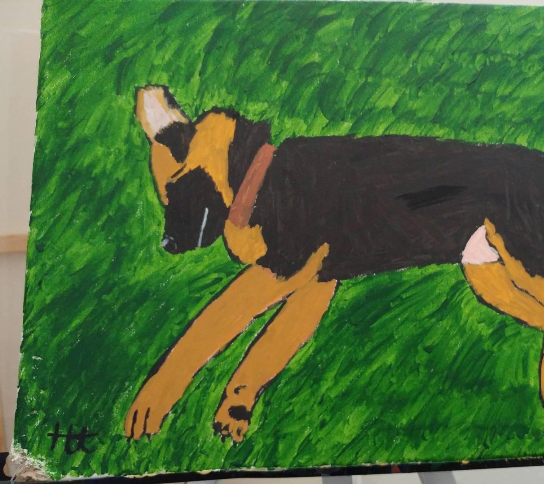 Sheba in the grass
