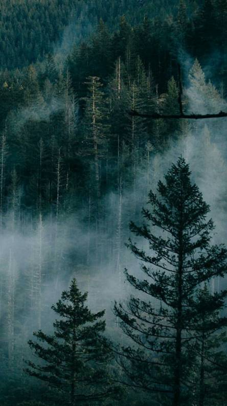Foggy Forest Ringtones And Wallpapers Free By Zedge