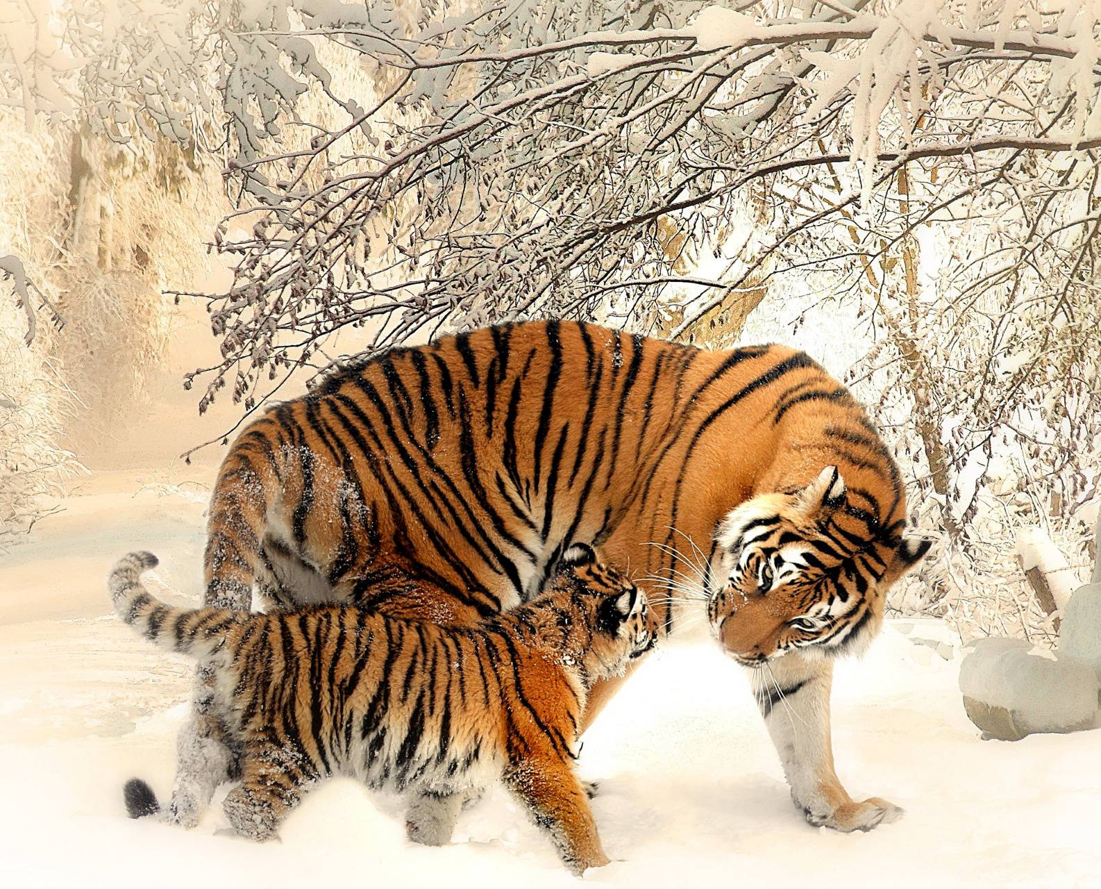 Mom Tiger with Cub