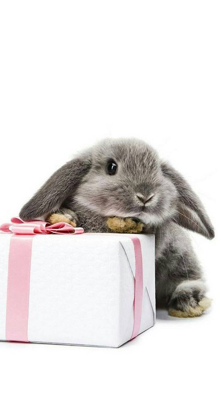 Present Bunny