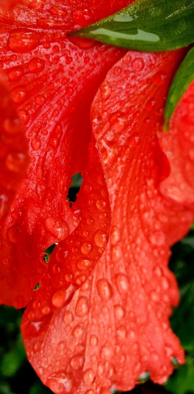 flower rain drops