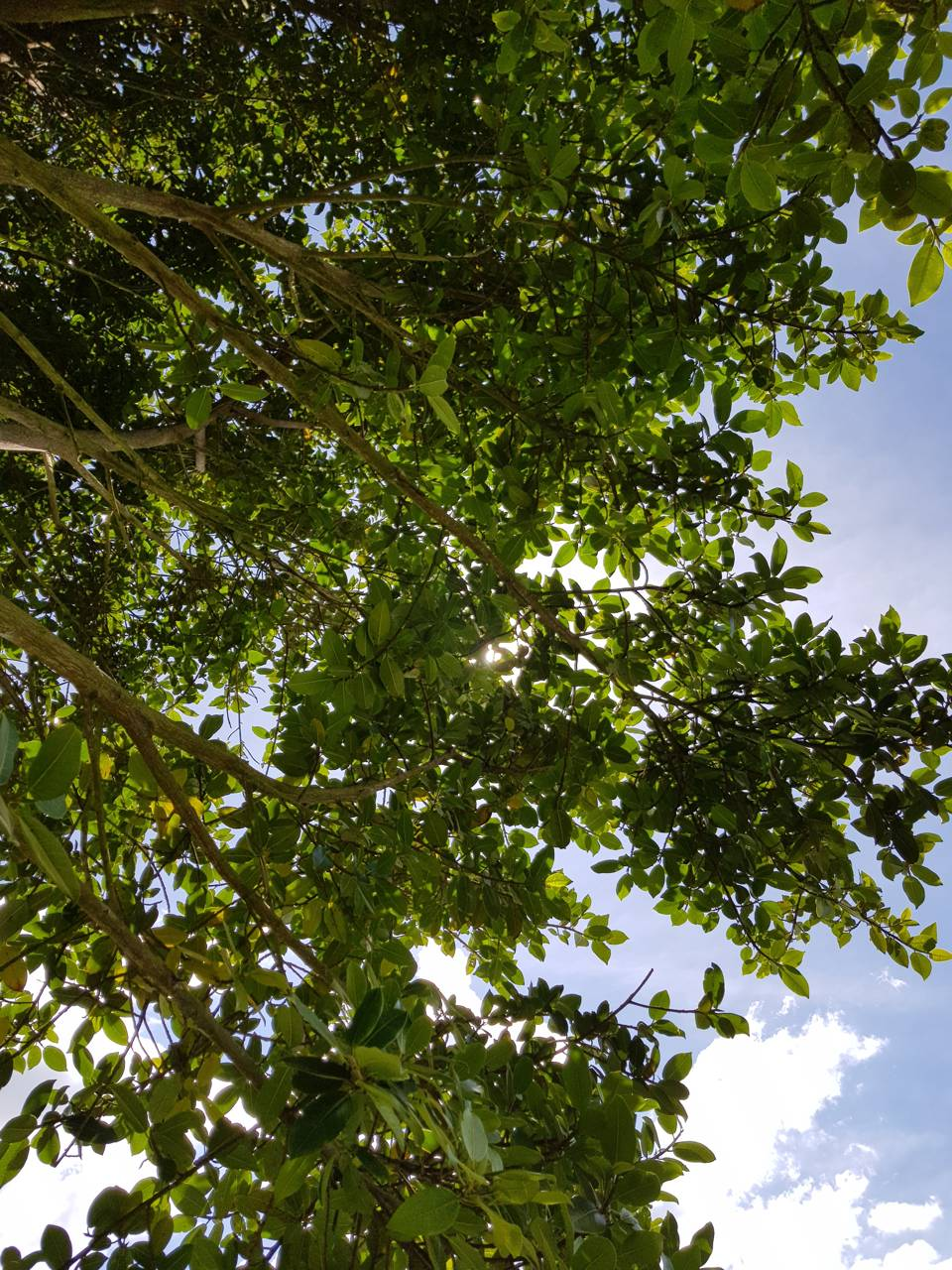 Leaves at the sky