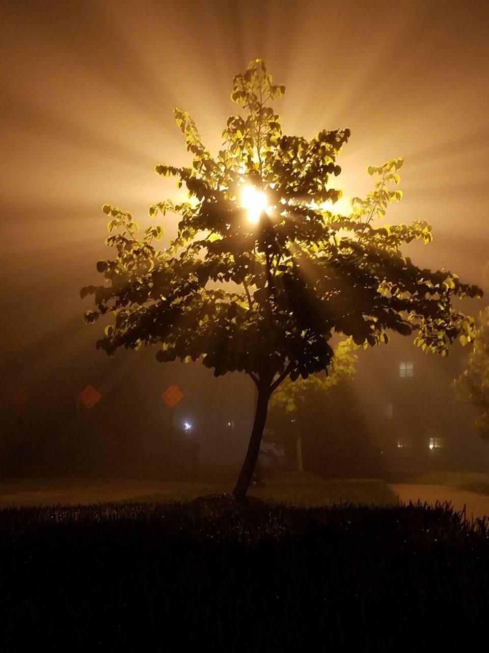 Foggy Silhouette