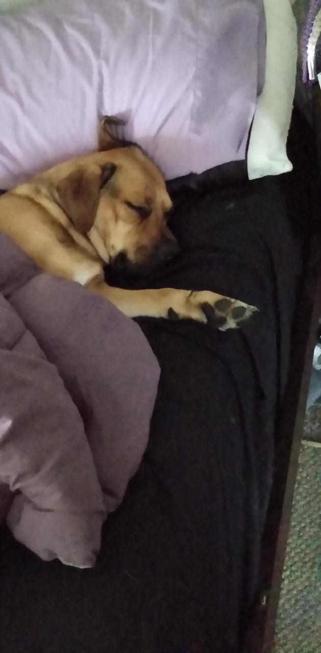 Pup bed hog