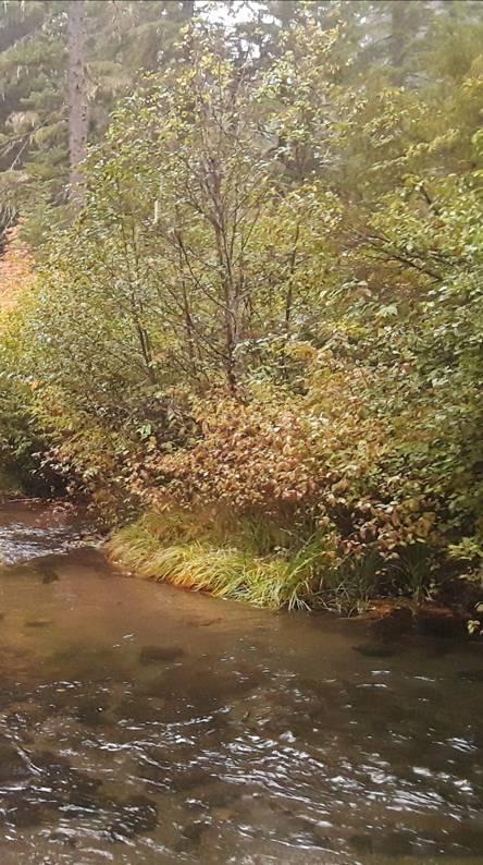 Mill Creek Oregon