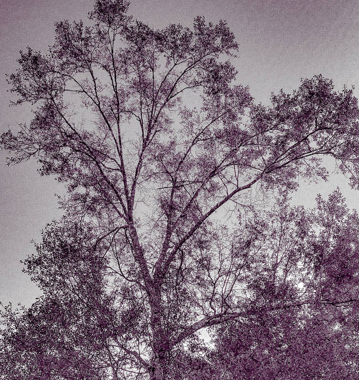 Sketch art Tree