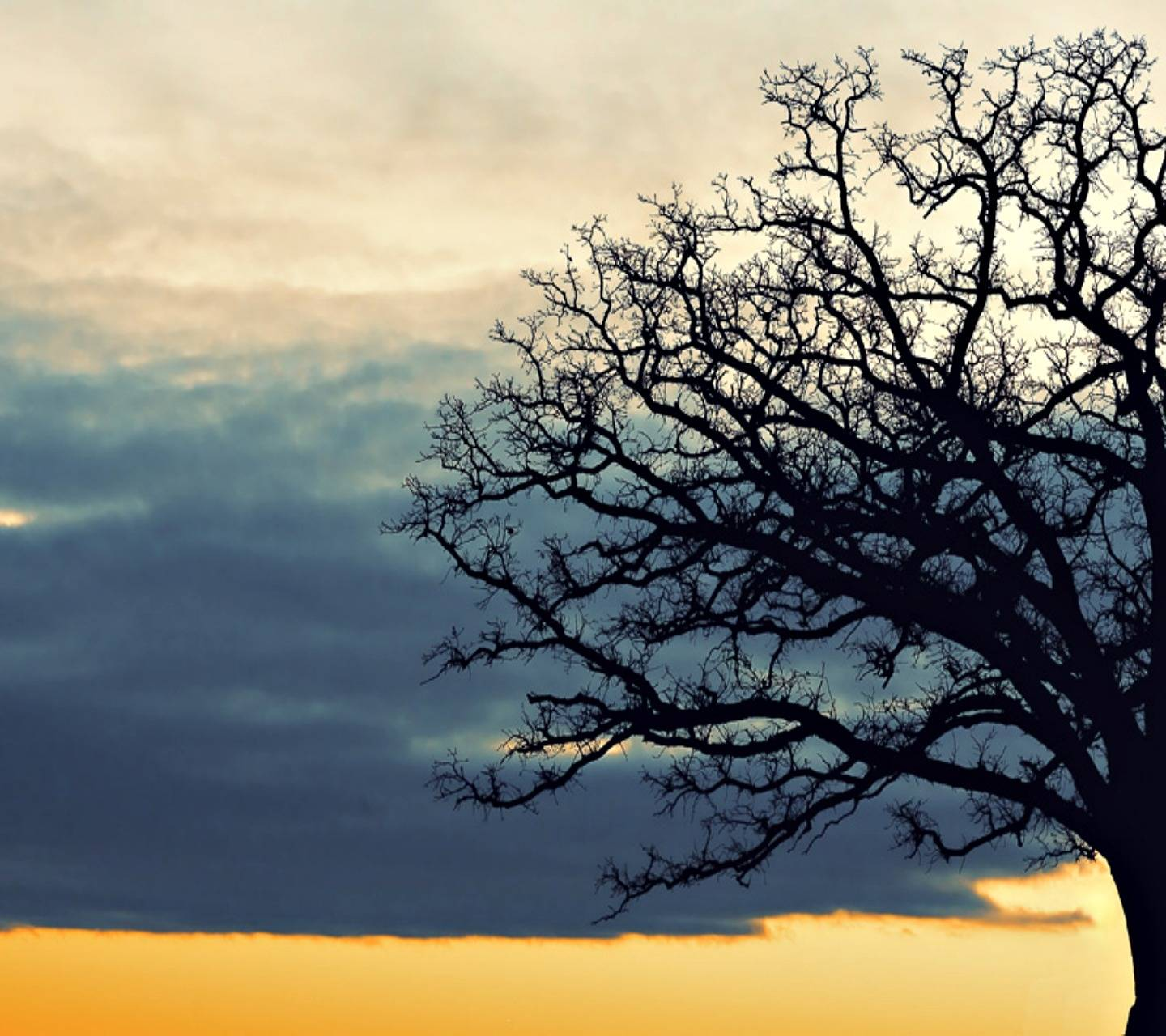 Lonely Tree Hd