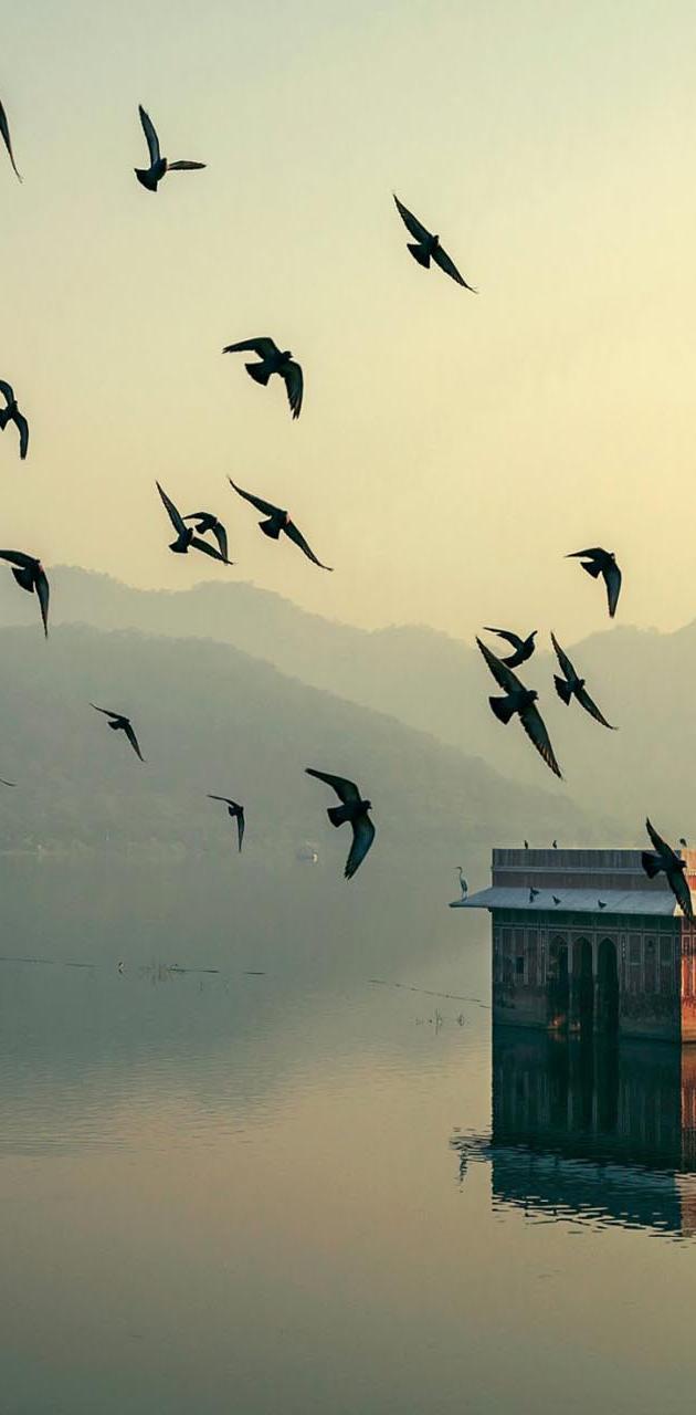 Birds Morning