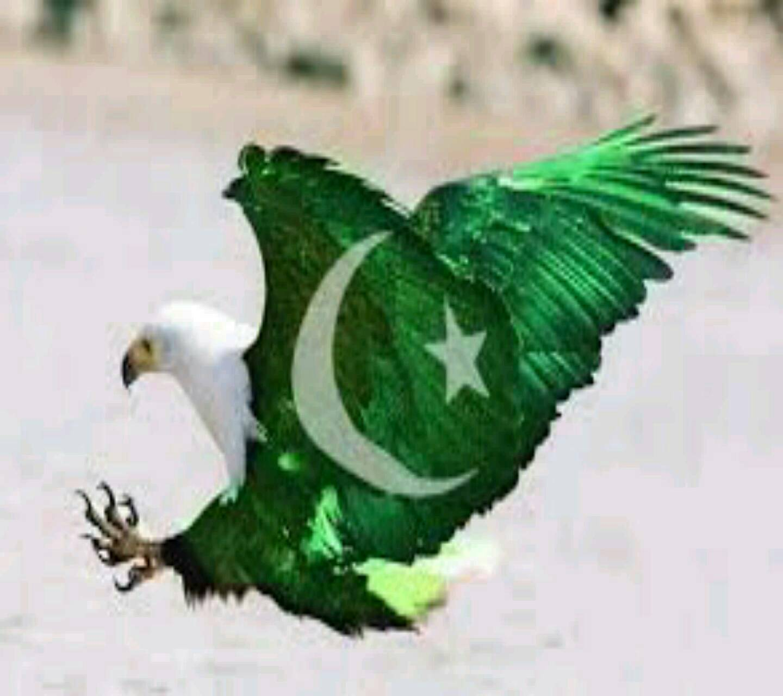 Eagle flag colour