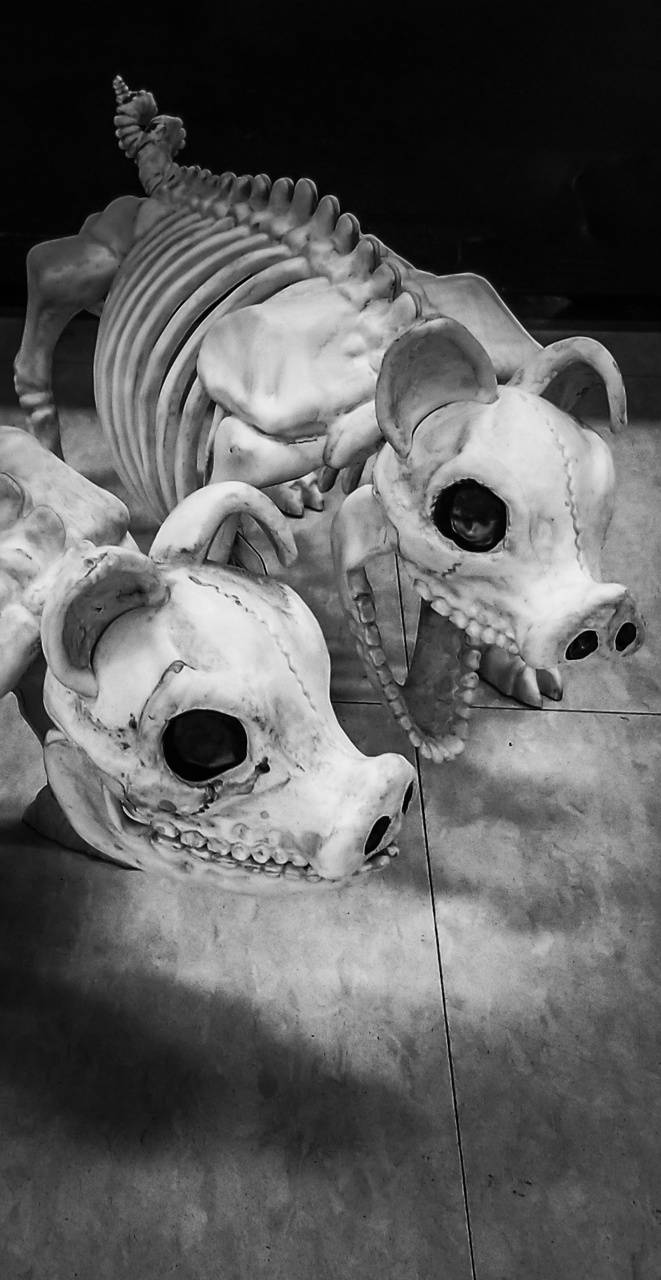 Skeleton Pigs