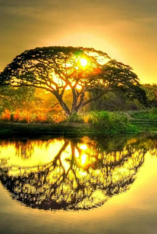 Tree - Pond