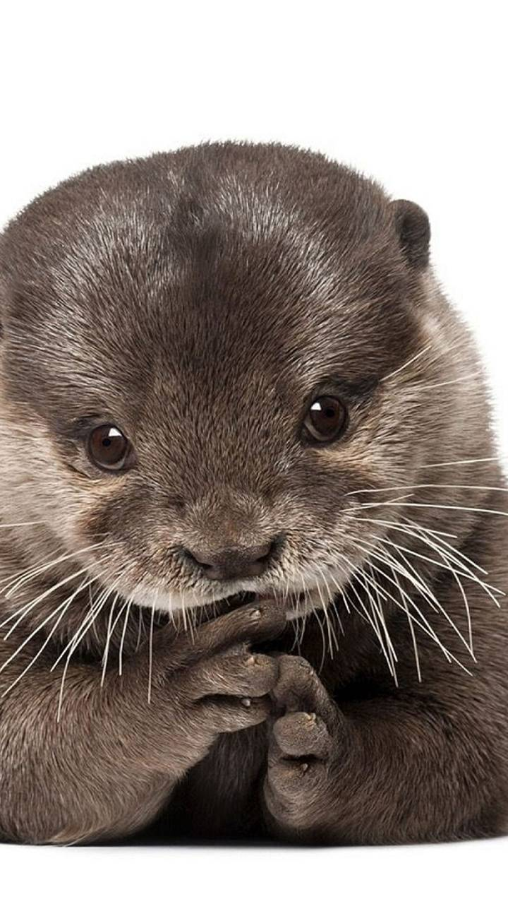 Otter Wallpaper By Dljunkie 22 Free On Zedge