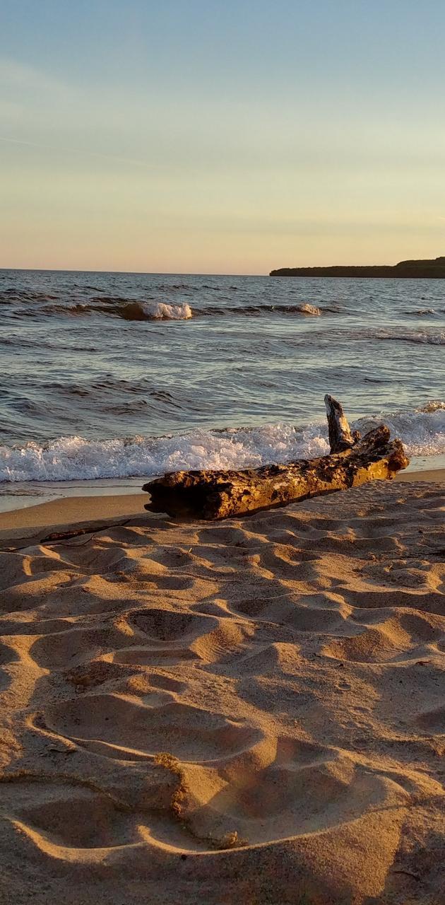 PancakeBay driftwood