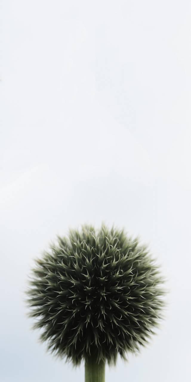 Funny Plant