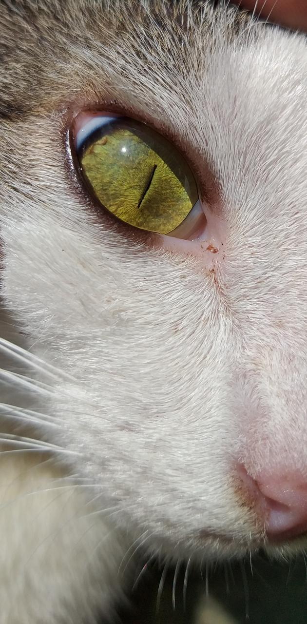 Cat eye creature