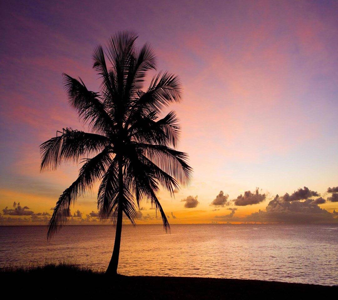 Nature palm tree