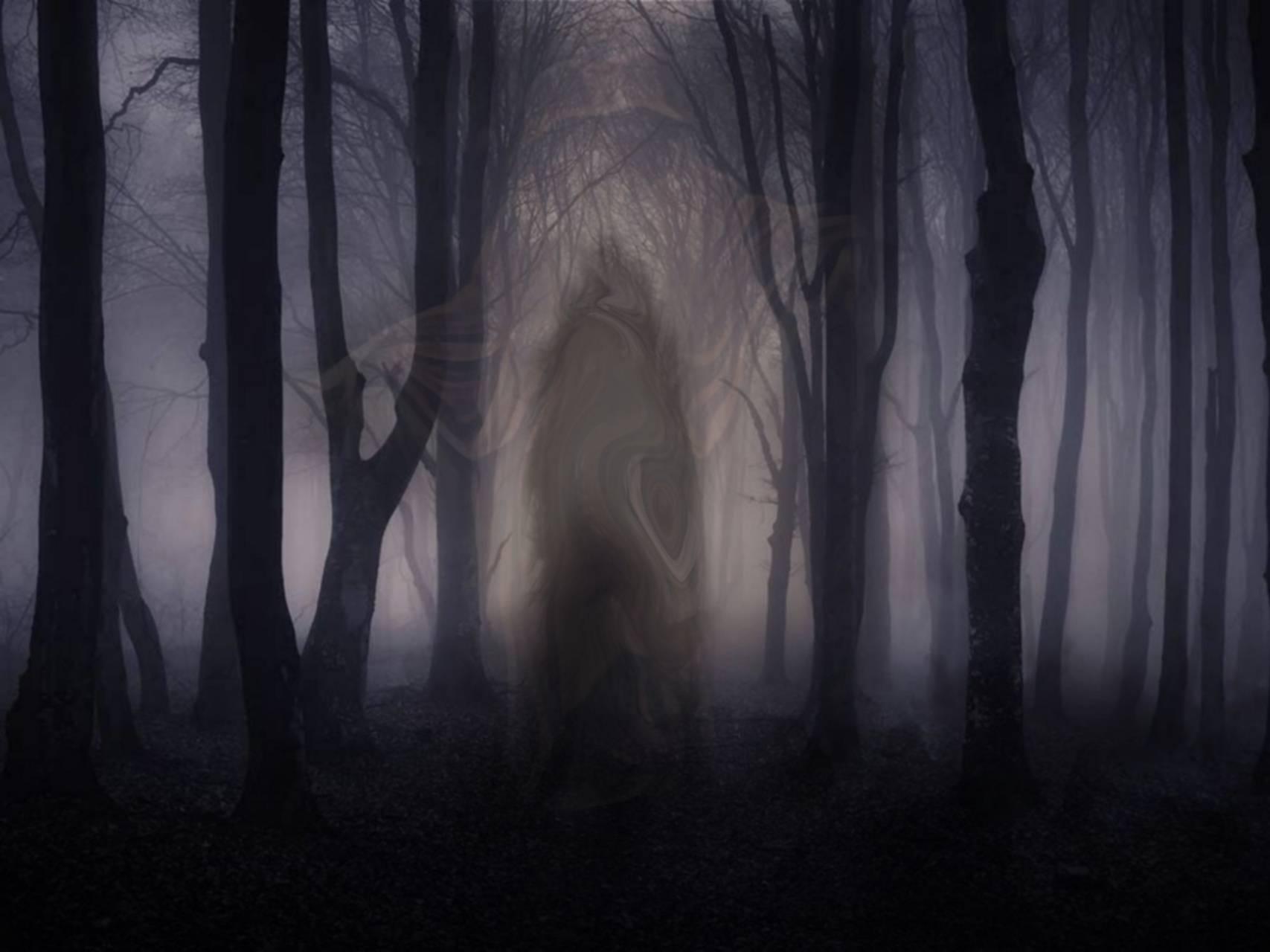 Shadow Walker Woods