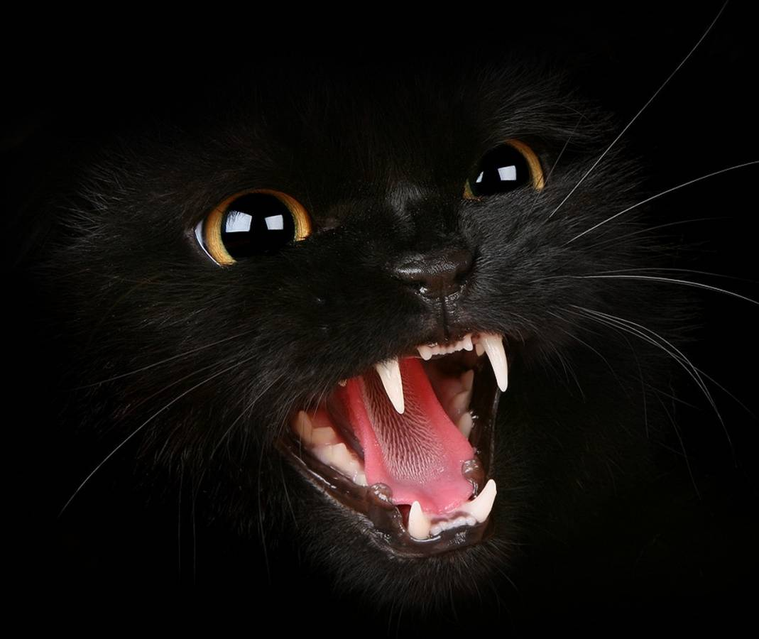 Cat Wallpapers For Iphone: Hissing Black Cat Wallpaper By KingMixer