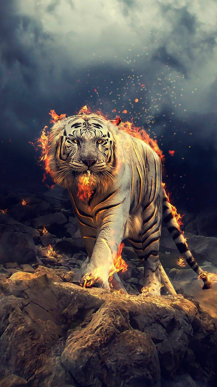Tiger 1 Wallpaper By Lizziewilson15 Dc Free On Zedge
