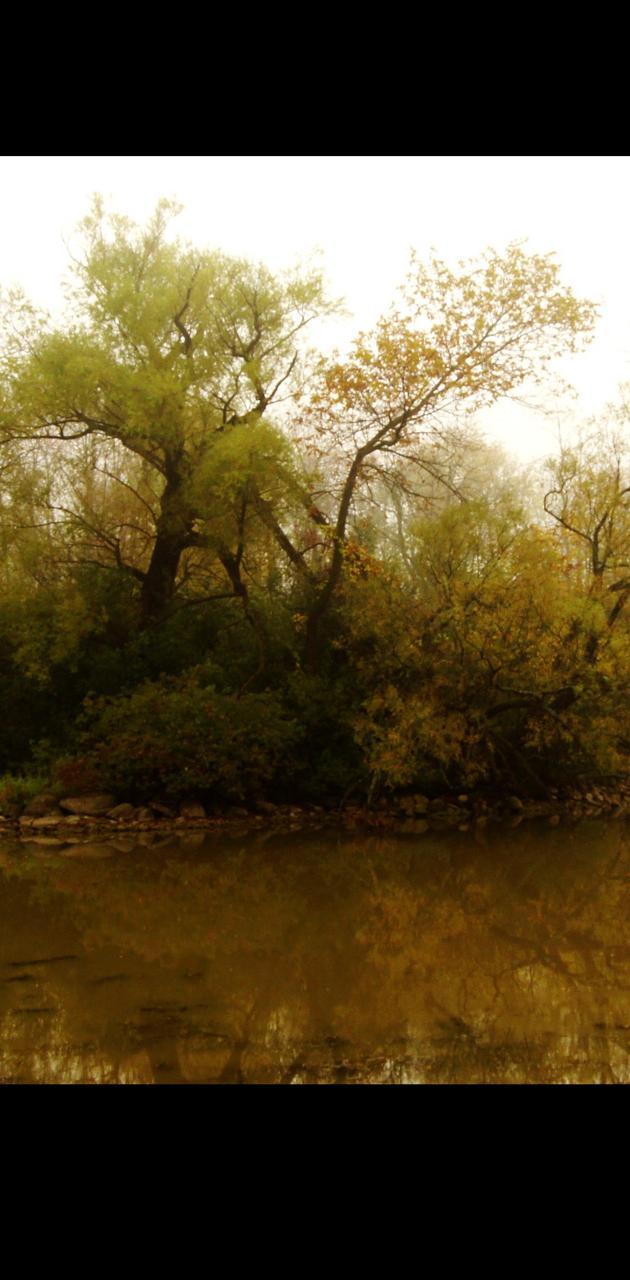 Captured By Fog